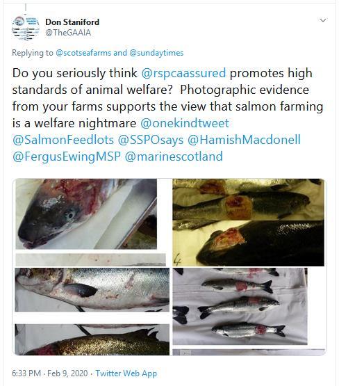 RSCPA Tweet #17 GAAIA reply to SSF