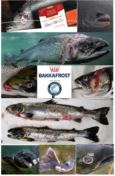 The Faces of Scottish Salmon Feb 2020 #10 SSC Bakkafrost