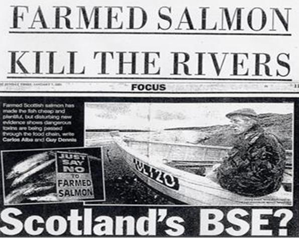 Farmed Salmon Kill the wild rivers