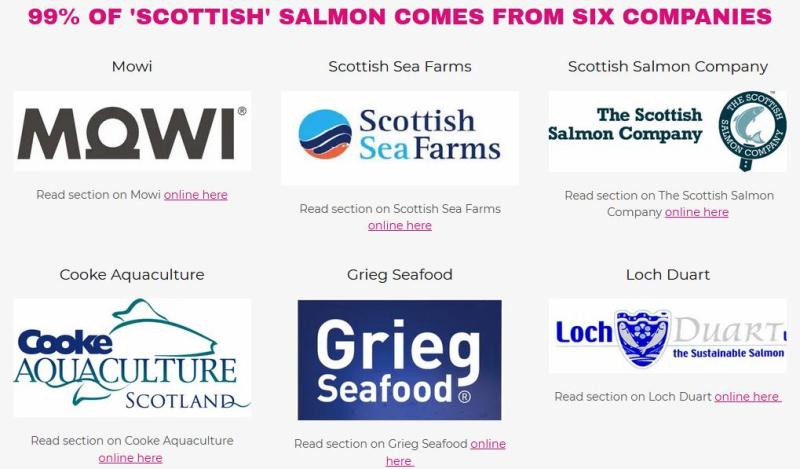 Scottish Scamon 99%