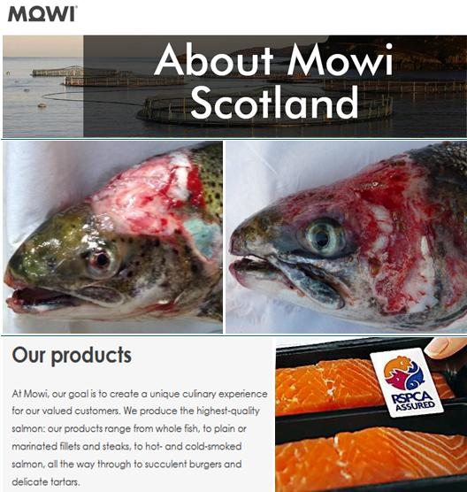 About Mowi Scotland #2