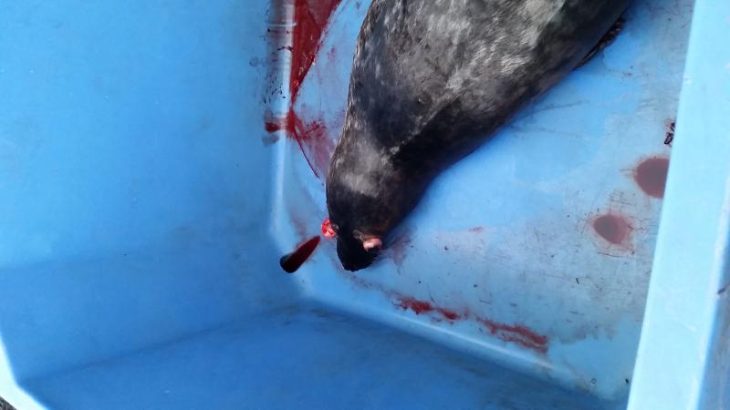 Photo Seal in bin 20181212_094449 M801-18 (1)