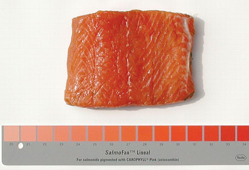 SalmoFan Lineal