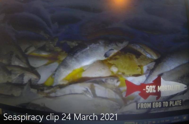 Seaspiracy clip #1 50% mortality