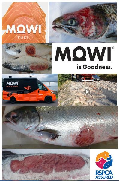 The Faces of Scottish Salmon Feb 2020 #12 Mowi RSPCA