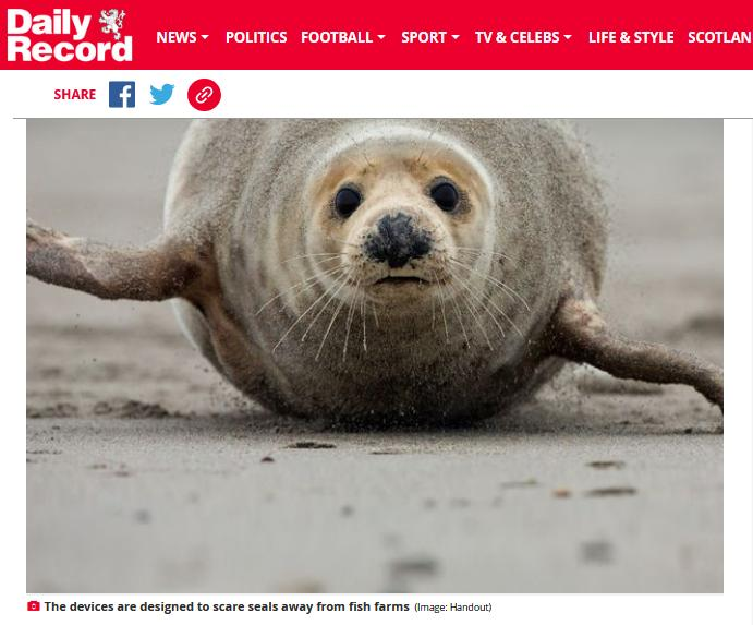 Daily Record 3 August 2020 ADDs #6 photo