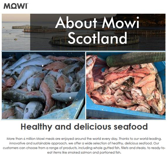 About Mowi Scotland #1