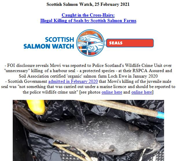 PR Illegal Killing of Seals by Scottish Salmon Farms 21 Feb 2021 #1