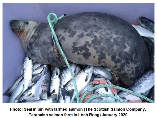 Photo #1 Taranaish seal in bin January 2020