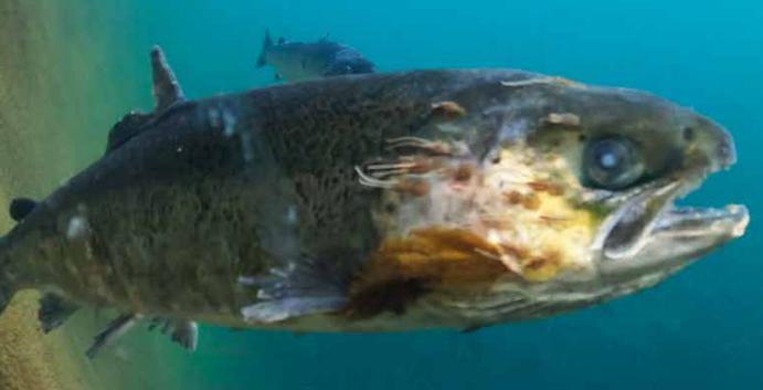 CIWF Dead Fish report March 2021 #2 photo
