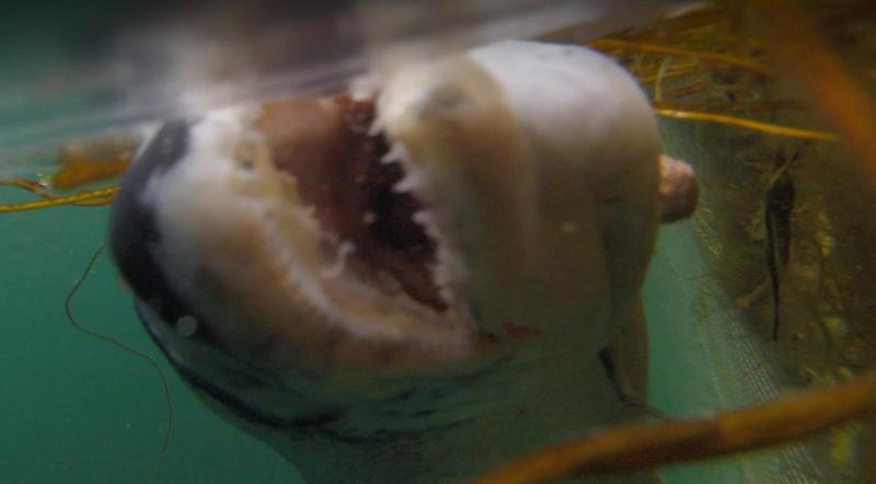 Port Na Cro 17 July 2021 photo #10 Jaws