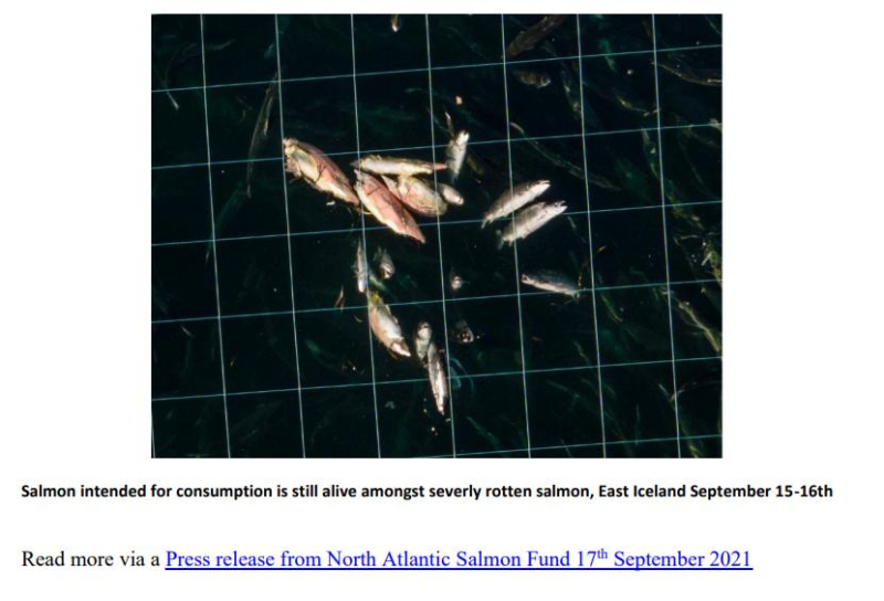 PR NASF & Animal Concern 18 September 2021 #7