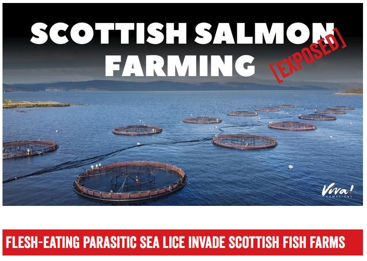 Viva Scottish Salmon Exposed Nov 2020 #2