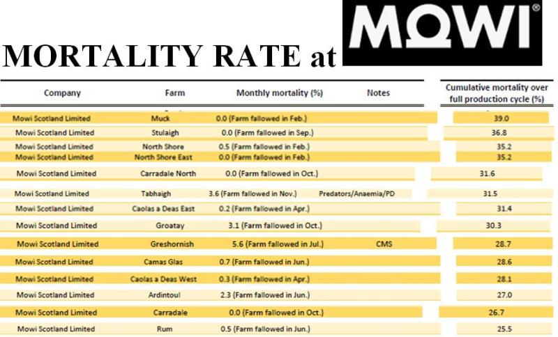 Mowi mortality