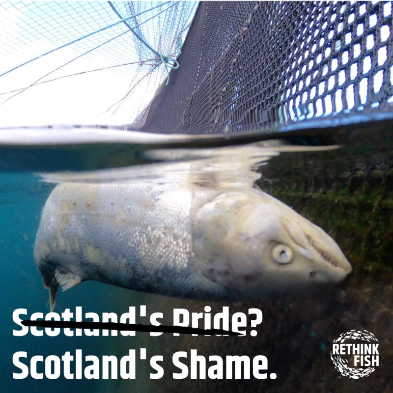 CIWF Scottish Salmon Investigation March 2021 Graphics #2