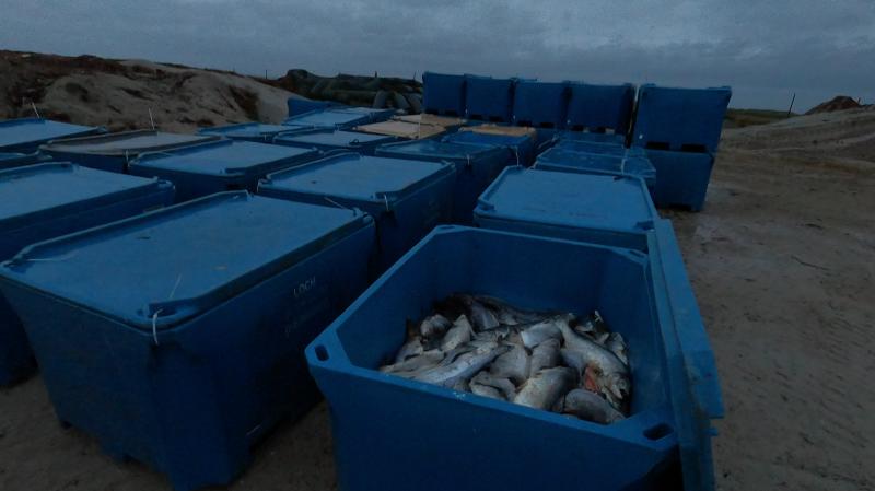 CIWF Scottish Salmon Investigation March 2021 #13 Landfill