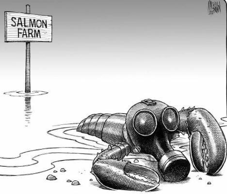 Lobster cartoon