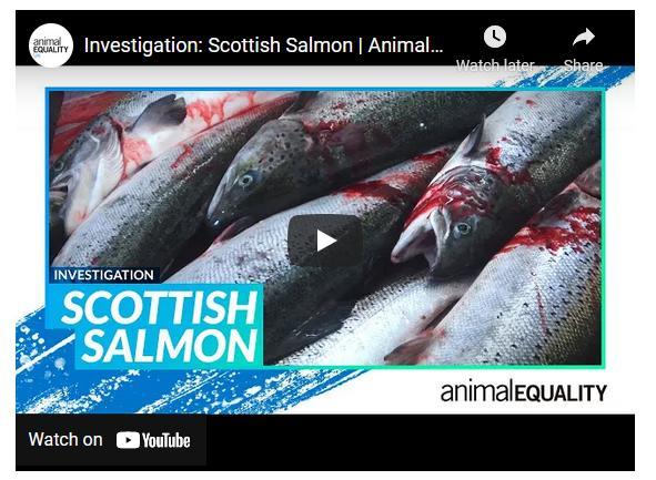 Native Hebridean salmon #5