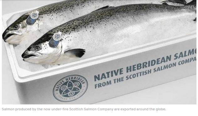 Native Hebridean salmon #7