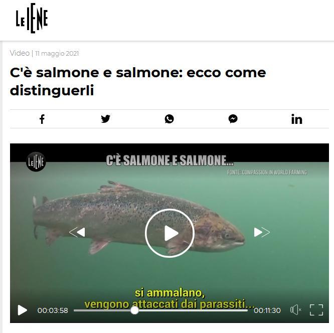 Italian TV May 2021 #CIWF