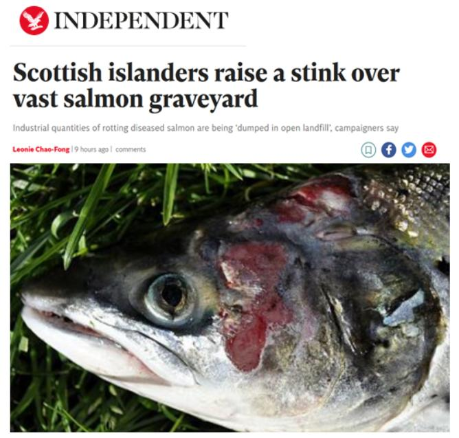 Independent 27 May 2021 #1
