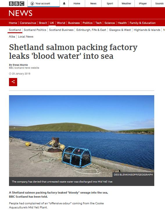 BBC blog #11