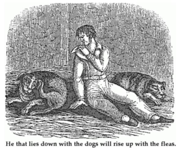 Dogs fleas