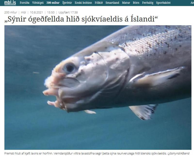 Iceland News #1