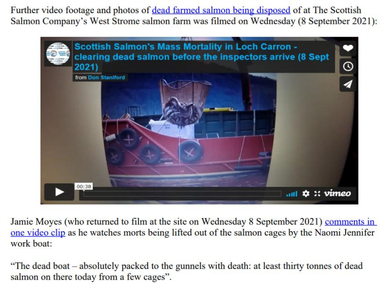 PR Horror Videos Reveal Welfare Abuse Inside Scottish Salmon & Trout Cages 12 September 2021 #8