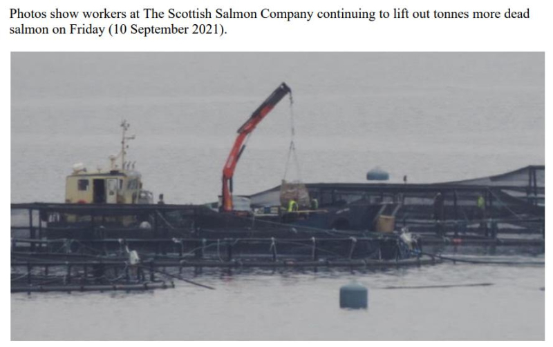 PR Horror Videos Reveal Welfare Abuse Inside Scottish Salmon & Trout Cages 12 September 2021 #11