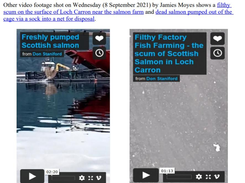 PR Horror Videos Reveal Welfare Abuse Inside Scottish Salmon & Trout Cages 12 September 2021 #13