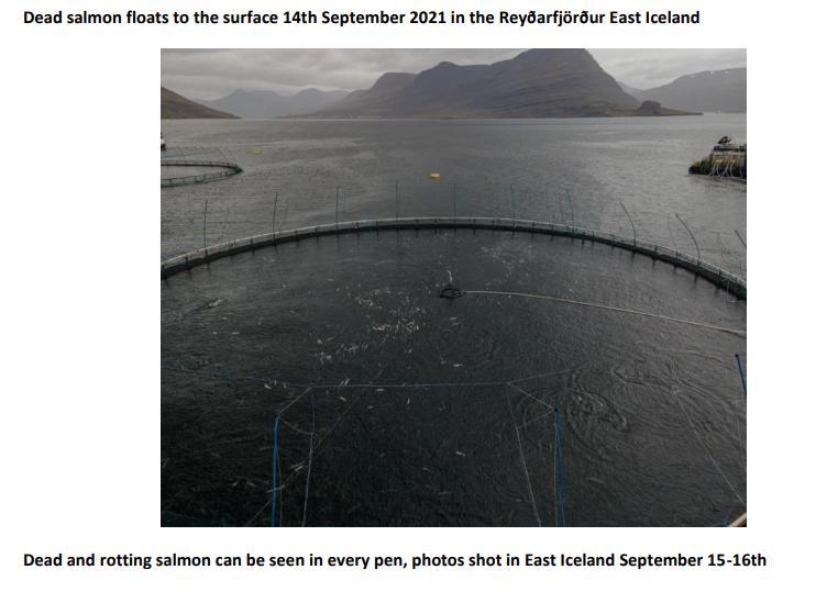 PR NASF & Animal Concern 18 September 2021 #6