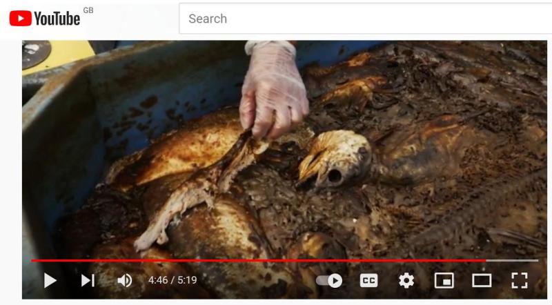 Clayoquot die off video 7 Oct 2021 #6