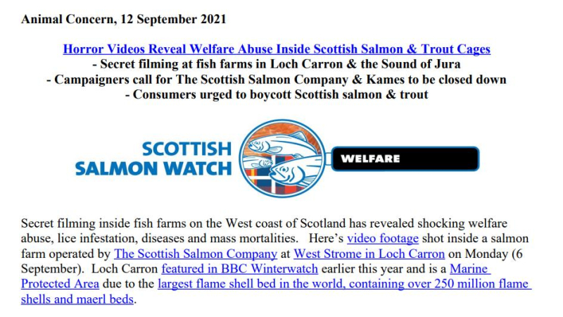 PR Horror Videos Reveal Welfare Abuse Inside Scottish Salmon & Trout Cages 12 September 2021 #1