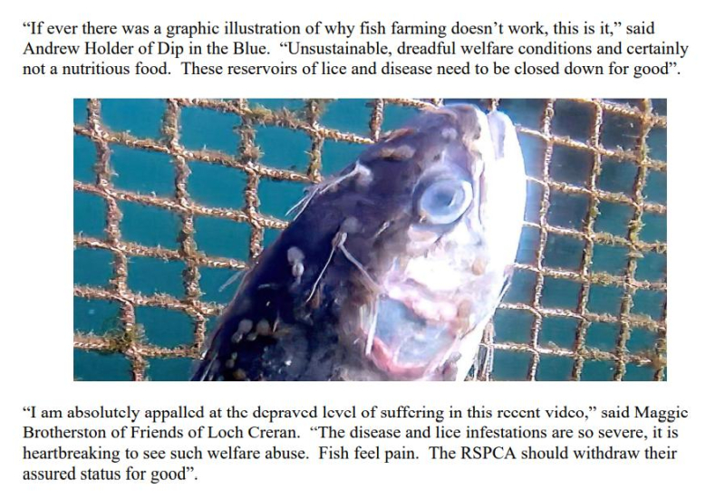 PR Horror Videos Reveal Welfare Abuse Inside Scottish Salmon & Trout Cages 12 September 2021 #4