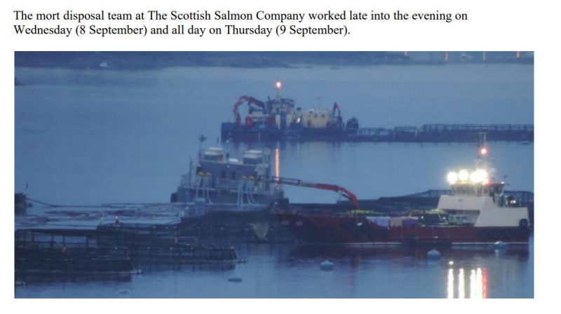 PR Horror Videos Reveal Welfare Abuse Inside Scottish Salmon & Trout Cages 12 September 2021 #10