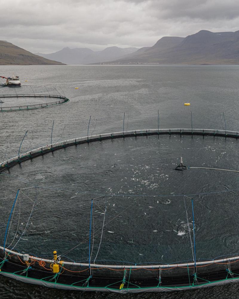 Veiga dead salmon Sept 2021 #1