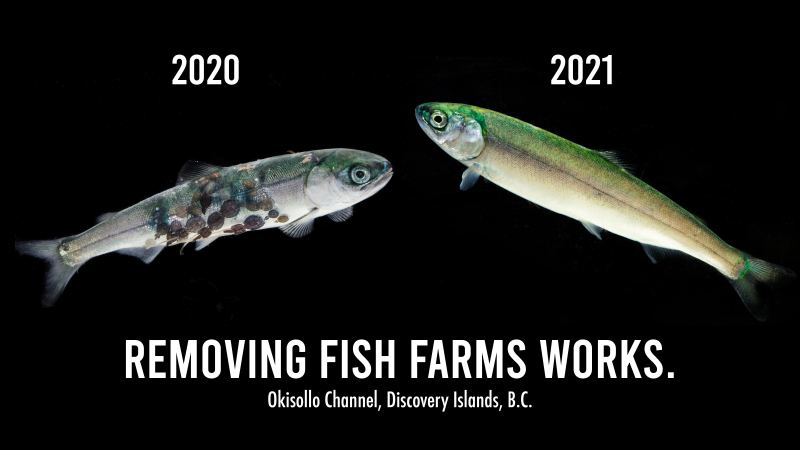 Removing Fish Farms Works 1_0